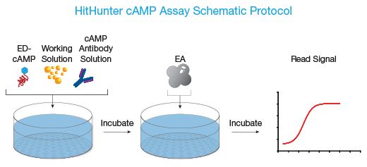 HitHunter cAMP Assay Protocol