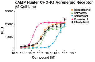 cAMP Hunter CHO-K1 Adrenergic Receptor B2 Cell Line