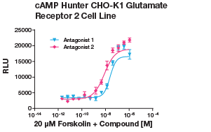 cAMP Hunter CHO-K1 Glutamate Receptor 2 Cell Line