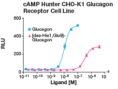 cAMP Hunter CHO-K1 Glucagon Receptor Cell Line