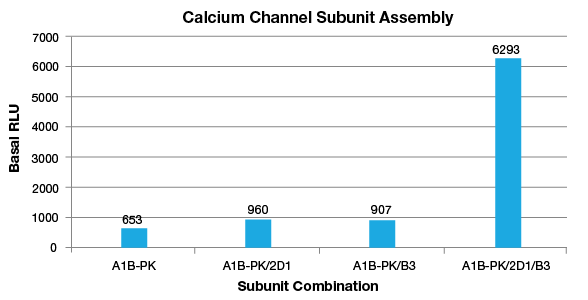Calcium Ion Channel Subunit Assembly